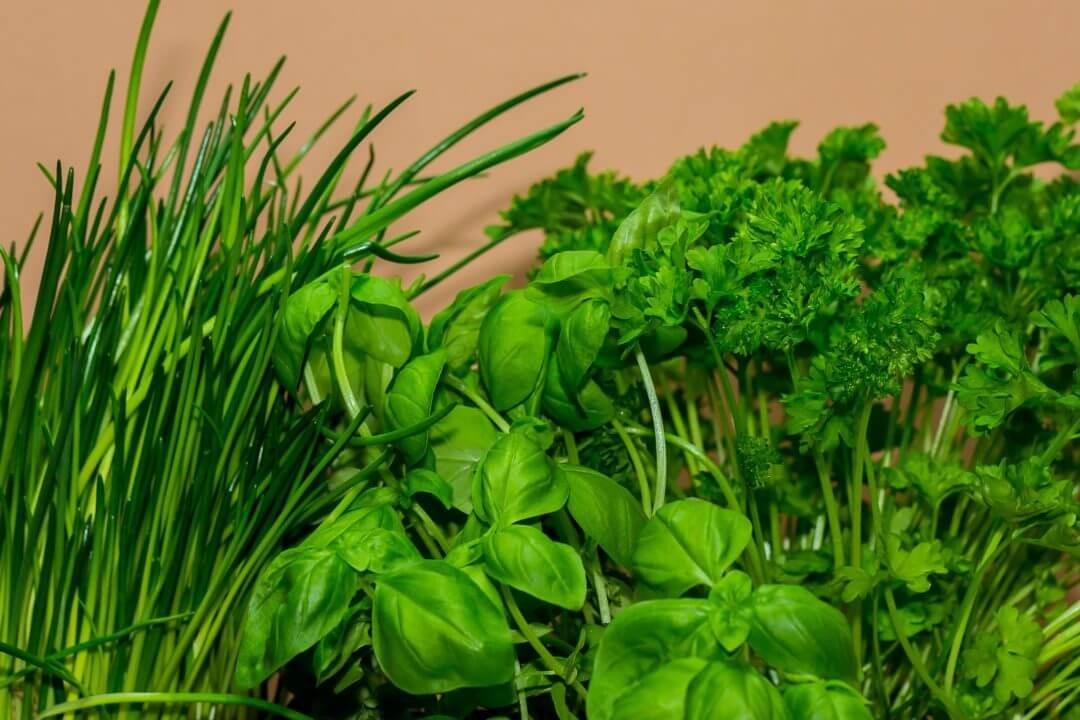 Quelles Plantes Aromatiques Dans La Cuisine Je Jardine