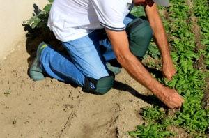 genouillere jardinier