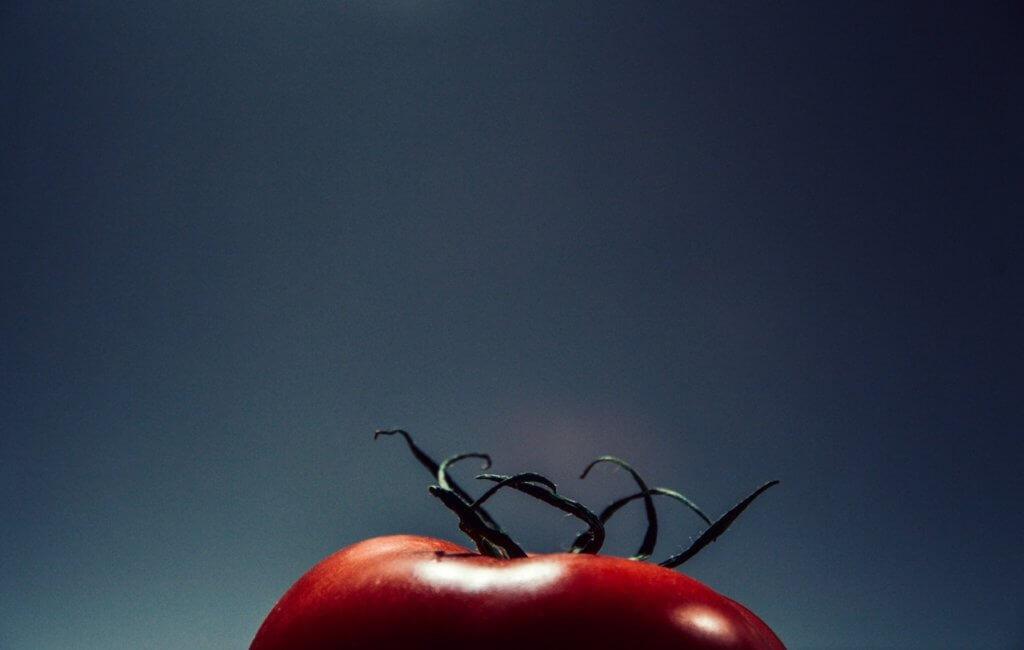tomate semis culture monpotdefleurs